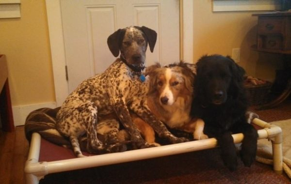 "Its been a long time since I have shared a ""place"" photo. Black eared dog, Shorty, is taking up most the space."