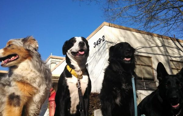 Such a beautiful sunny day. Enjoy the day and get out and walk your dogs! ( My walking buds: Ginger, Zoe, Jack, and Hans)