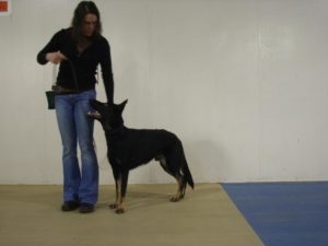 Basic Obedience - AWPPW Downtown Camas @ AWPPW Downtown Camas