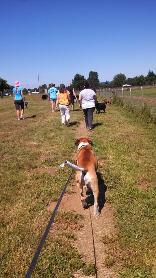 Great social today 11 dogs off leash saying hi nicely to each other. Sasha, Whisper, Zues, Ziggy, Charlotte, and Cutty all made it, and great helper dogs. — at West Columbia Gorge Humane Society.